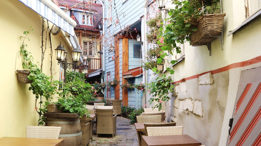 Potted plants on wall against buildings in city