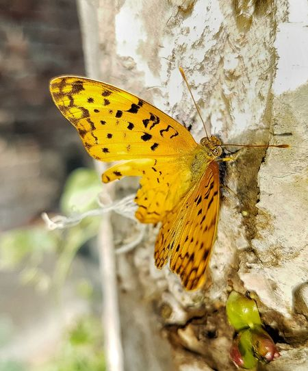 Butterfly - Insect Insect One Animal Animals In The Wild Nature Close-up Butterfly Outdoors Day No People Plant Animal Markings Beauty In Nature Freshness Spread Wings Animal Wildlife Perching Animal Themes Yellow India EyeEm Selects