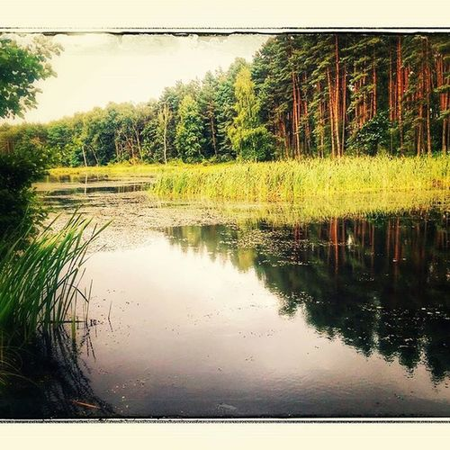 Igersoftheday Forest Naturelovers See Ayad_photography Nature World_great Igerspoland Polska Bagna Rozlewiska Bestphotooftheday Followforfollow Htcphotografy Arte_of_nature Great_shots Bestwatershot Igerseurope Rsa_nature