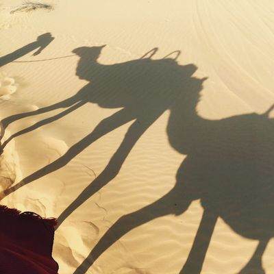 Shadow of camels Camel Camelride Shadow Sunlight Nature Lifestyles Focus On Shadow Day Sand Land Leisure Activity