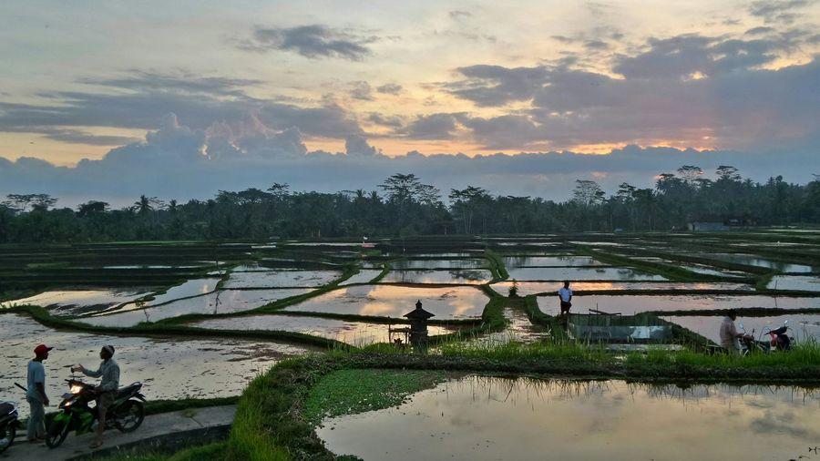 Bali Bali Ubud Ricefields Jeanmart Bali 16:9 Verybalitrip Very Bali Trip The Great Outdoors - 2016 EyeEm Awards