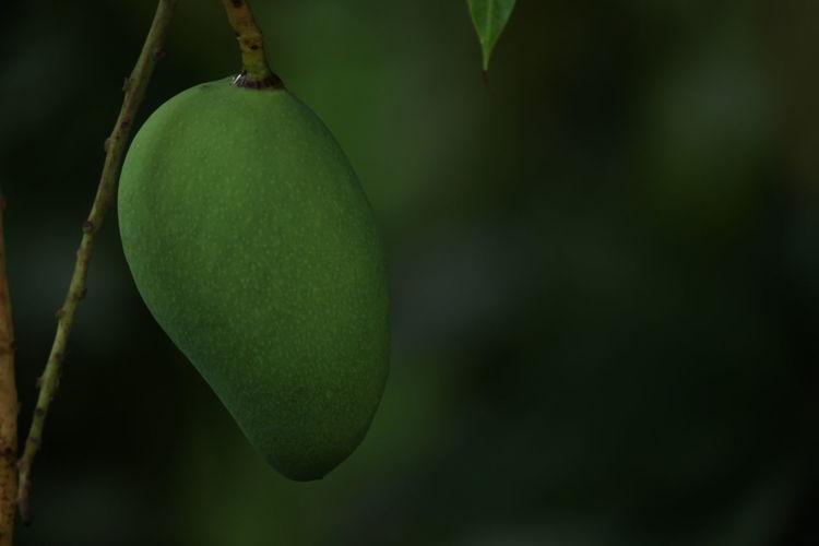 The Mango Mango