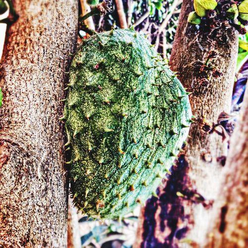 Fruit Baia Da Guanabara Nature