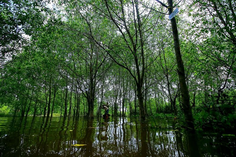 Mangrove Forest Capture Tomorrow Tree Water Backgrounds Full Frame Bamboo Grove Branch Sky Green Color Green Greenery Flora Vegetation Young Plant Water Drop Grassland