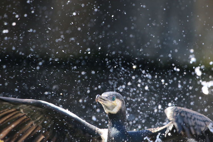 Low Angle View Of Bird During Snowfall