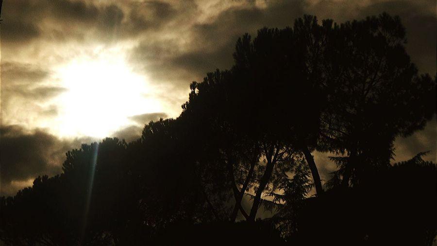 Light Sun Light