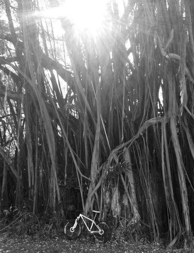 Blackandwhite Monochrome Biking Taking Photos