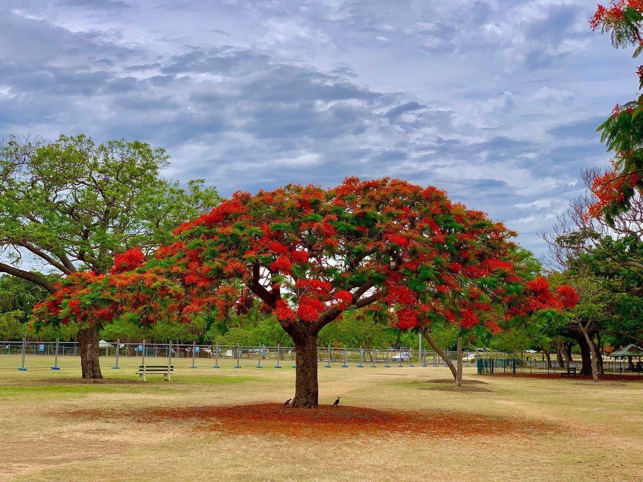 AUTUMN TREES IN PARK AGAINST SKY