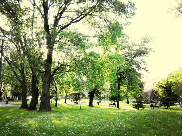 Labour Day Enjoying Life Freeday In Park TreePorn