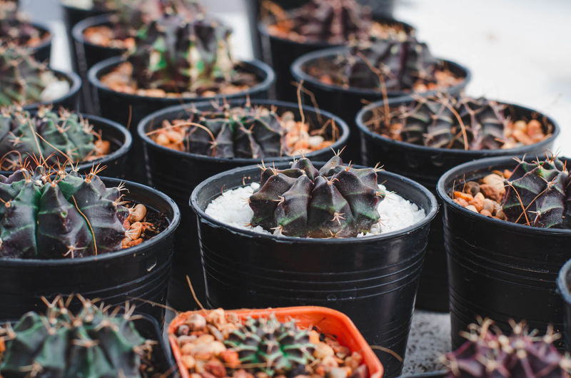 Potted plants for sale at market