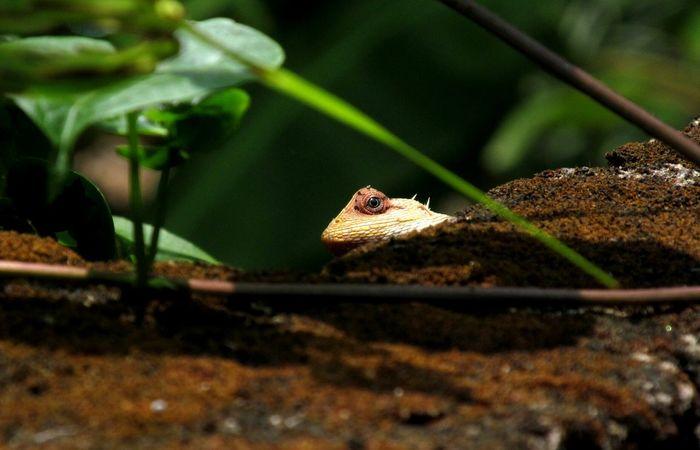 Peekaboo Garden Reptiles Taking Photos Eyeem Fauna Nature_collection Check This Out