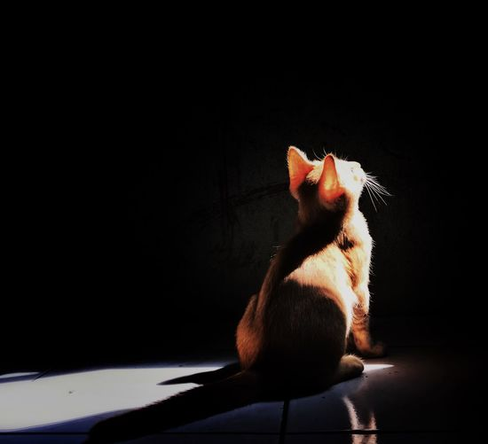 Looking for the lights Kitten Domestic Cat Pets Domestic Animals Animal Themes Mammal One Animal Cat Feline No People Sitting Shadow Indoors  Day