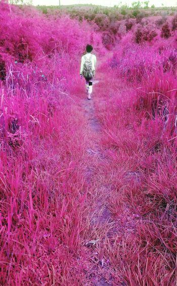 Pink Walking