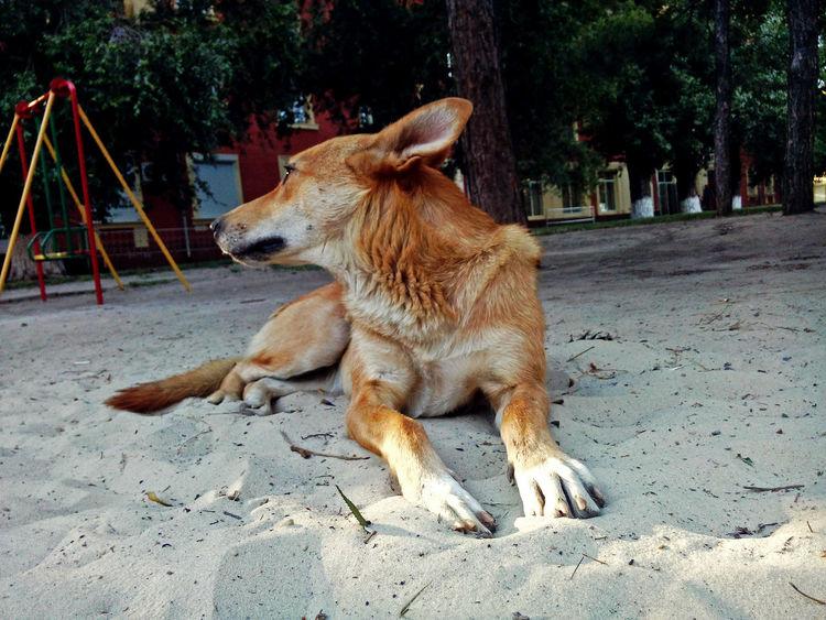 Animal Themes One Animal Tree Outdoors Dog Nature No People Day Во дворе Ростов-на-Дону Pets Life собака животное Жизнь Rostov-on-Don Nature Sand Multi Colored Playing