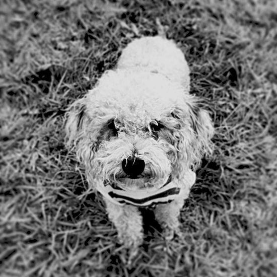 Pets Perro Animals Adoptanocompres Angelesde4patas Sasha  RePicture Travel Blackandwhite Mascota Doglifestyle