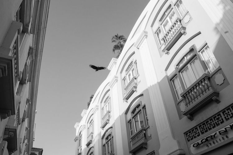 Volar Animal Themes Architecture Bird Bnw_captures Bnw_collection Bnw_life Building Exterior Built Structure Cartagena, Colombia City Colombia Colombia ♥  Day EyeEm Best Shots EyeEmBestPics Flying Low Angle View No People One Animal Outdoors Sky Window
