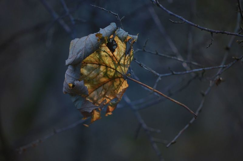 EyeEm Best Shots EyeEm Nature Lover Autumn Beauty In Nature Branch Change Close-up Day Dead Plant Dried Plant Dry Focus On Foreground Fragility Leaf Nature No People Outdoors Tree Twig