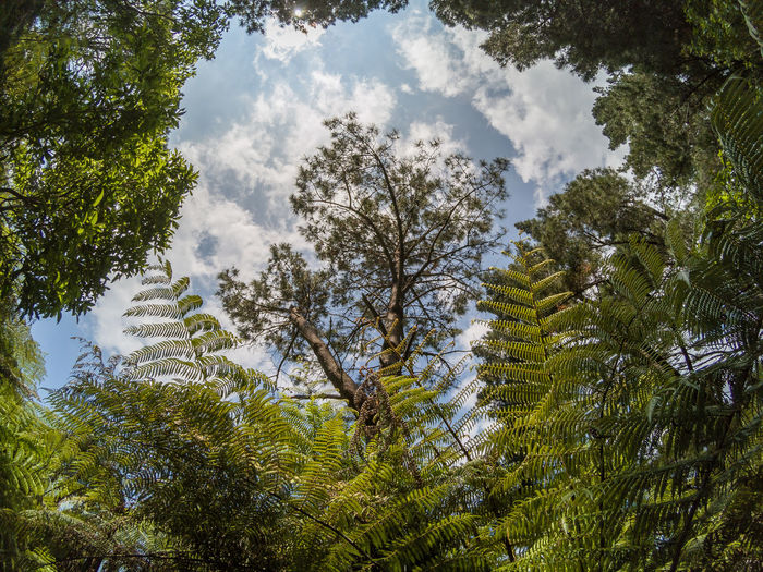 Low angle view of a treetop in a forest with ferns. Australia Australian Bush Australian Bushland Australian Landscape Beauty In Nature Branch Bush Day Fern Freshness Growth Landscapes Low Angle View Nature No People Outdoors Sky Sunlight Tranquility Travel Destination Travel Destinations Traveling Tree Treetop
