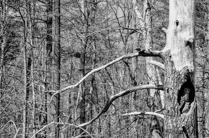 Winter in black and white. Texture Textured Surface Textured  Backgrounds Repetition Simple Photography Simple My Town Mississauga. From My Point Of View Outdoors Tree Branch Bare Tree Full Frame Black And White. Black And White Photography Low Angle View The Great Outdoors - 2017 EyeEm Awards