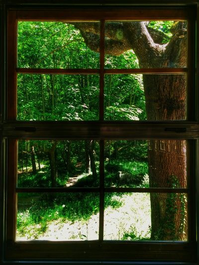 Taking Photos EyeEm Nature Lover Window View Green Nature Una buena noticia..la restauración del antiguo merendero de Santa fé del Montseny 👍👍 Santa Fe Del Montseny Montseny