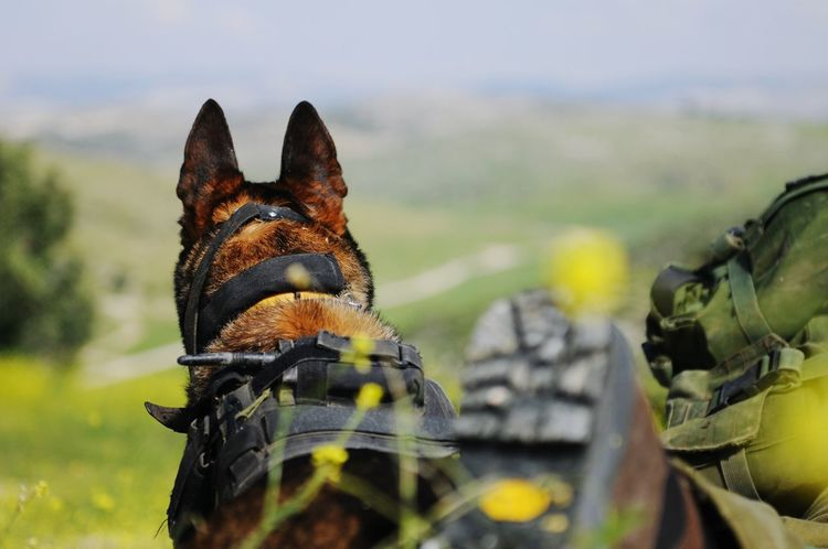 Taking Photos Check This Out That's Me Cheese! Enjoying Life Army Life Army Israel The Portraitist - 2015 EyeEm Awards Dog❤