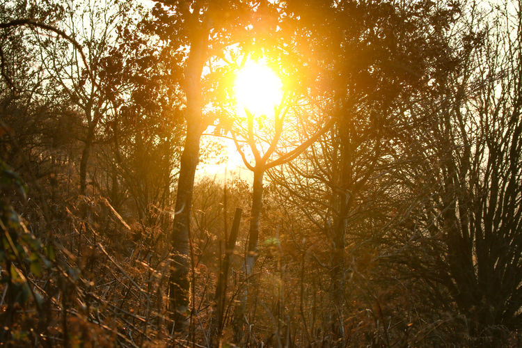 Sun through the trees Tree Plant Forest Tranquility Beauty In Nature Sunlight Land Nature Lens Flare Sky Growth Sunset Sunbeam No People Scenics - Nature Sun Tranquil Scene Non-urban Scene Outdoors Day WoodLand Streaming Bright Solar Flare Brightly Lit