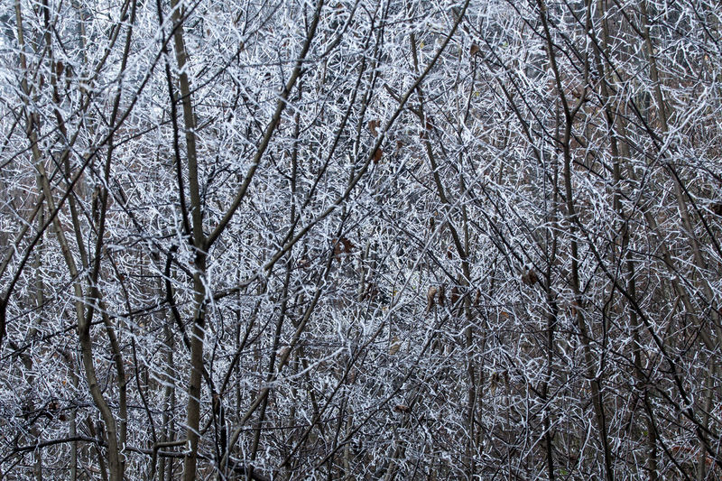 Low angle view of bare trees during winter