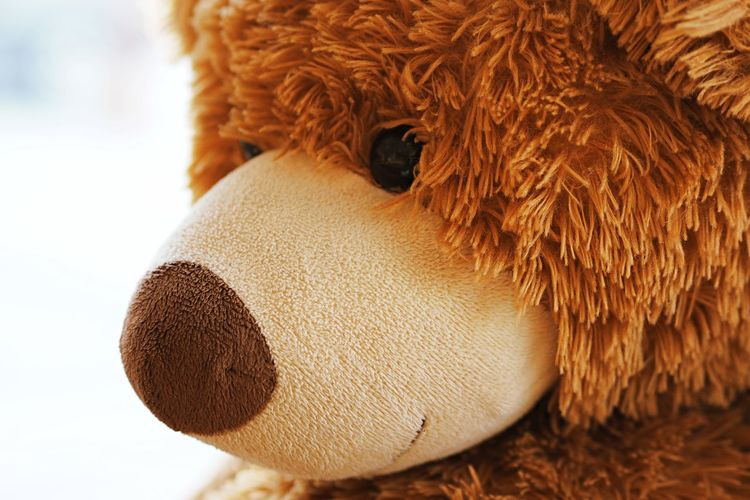 Close-up of a stuffed toy