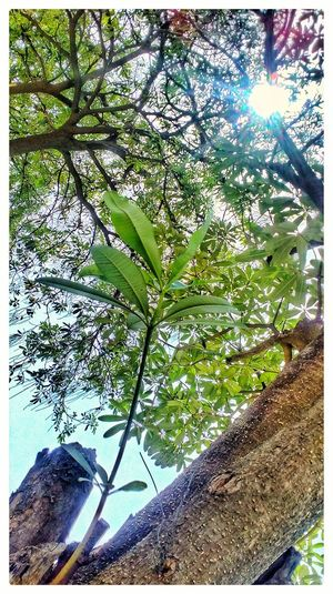 Nature Growth Tree Outdoors Beauty In Nature Plant Branch Close-up Springtime MotoE Mobile Photography EyeEm Nature Lovers EyeEm Nature Collection Growth Sky Leaf EyeEm Tree Collection EyeEm Nature Lover Fragility Beauty In Nature Freshness Sun And Tree