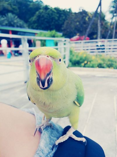 Birds Of EyeEm  Pets Birds