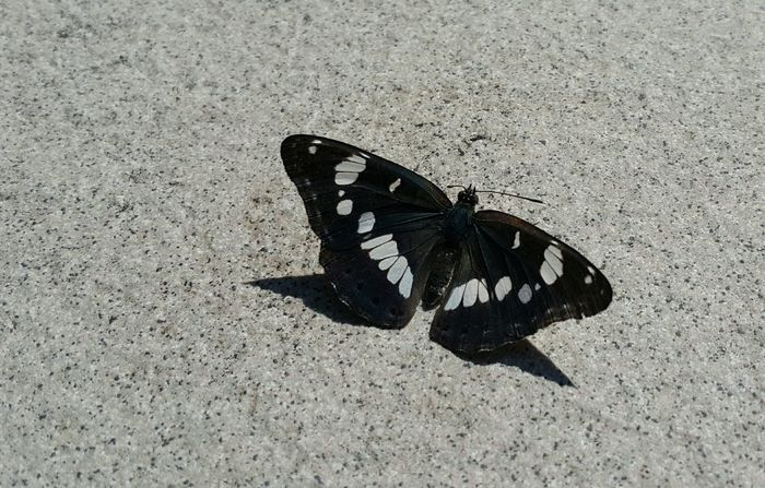 Butterfly Blackandwhite Shadow Wing Insect Nature In The Ground Pattern Symetry