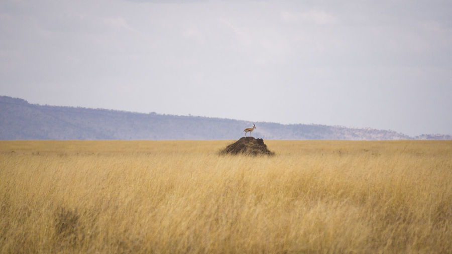 Mid distance view of deer standing on rock amidst landscape against sky
