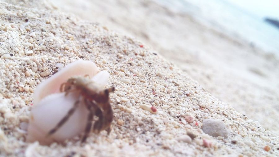 survival of the fittest. Crabspider Seacreature Crawlinganimal Sinkissed Oceanlife Exploringthesea Beautifulcreature ExploreTheNature NATUREISLOVE Gumasa Beach, Glan