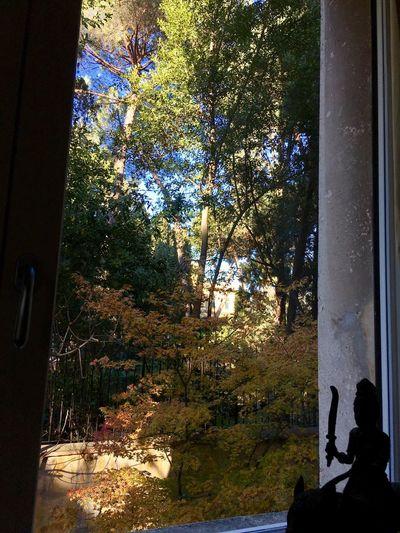 Expl👁ring Tree Window Indoors  Exploring Outside Hello World Taking Photos Enjoying The View