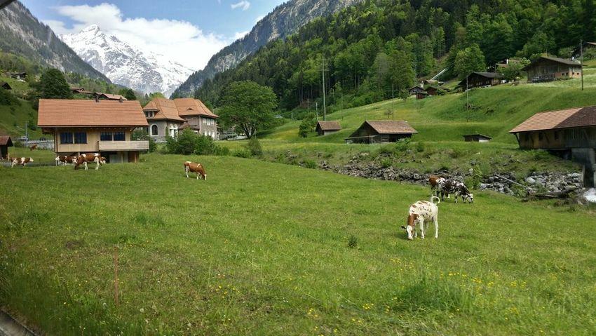 Grindelwald Enjoying Life EyeEm Best Edits Beautiful