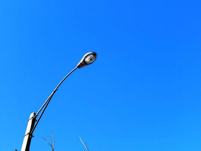 Clear Sky Bird