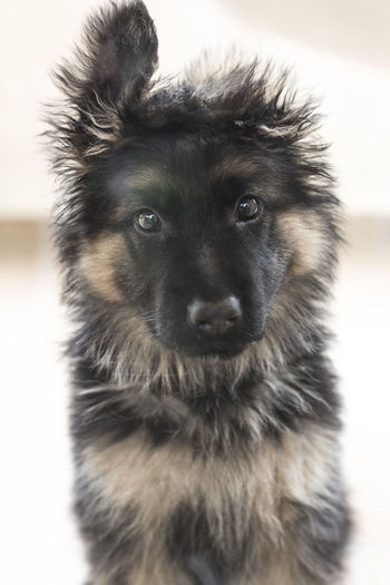 Lovely Pets Dog