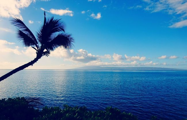 Tree Nature Sky Cloud - Sky Blue Sea Beauty In Nature Scenics Outdoors No People Water Day Landscape Sunset Horizon Over Water Hawaii Molokai's Beauty Moloka'i Blue Color Real Hawaiian Aloha Real Photography Vacation Beautiful Beaches Palm EyEmNewHere