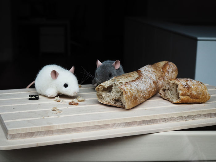 Close-up of mice eating baguette