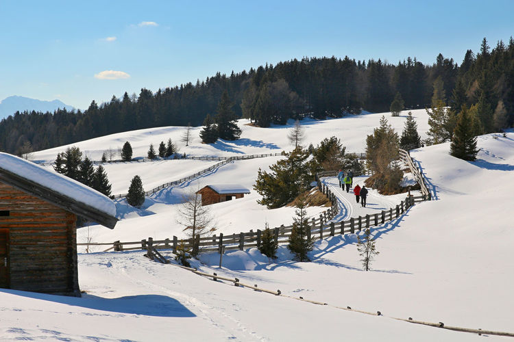 walk in Maranza - Beauty In Nature Cold Temperature Landscape Landscapes With WhiteWall Mountain Nature Scenics Snow Snow Covered Tranquil Scene Tranquility Tree White Color Winter
