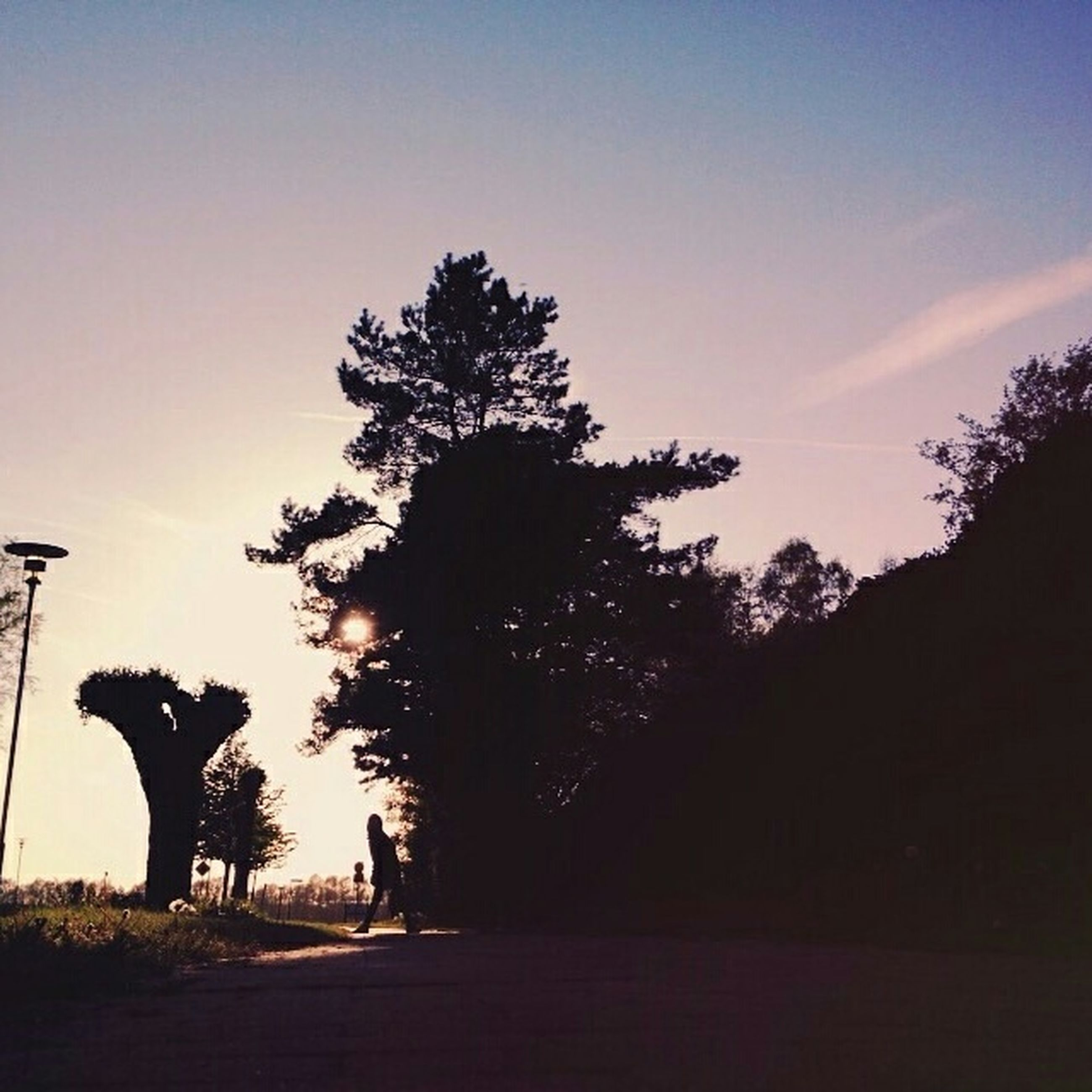 tree, silhouette, sky, sunset, the way forward, tranquility, tranquil scene, road, nature, beauty in nature, scenics, growth, transportation, dusk, landscape, outdoors, diminishing perspective, no people, street, idyllic