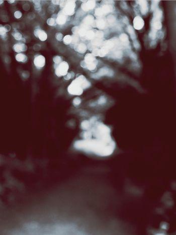 Pathway Hidden Flowers, Nature And Beauty Hidden Path Bokeh Bokehlicious