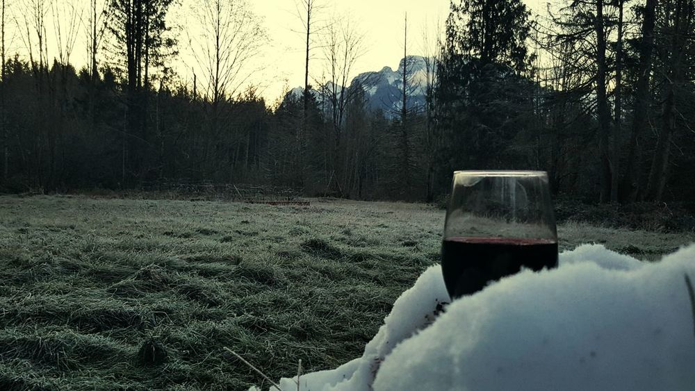 Wine Moments Cabernetsauvignon Tree Nature Cold Temperature Winter Snow Landscape Day Beauty In Nature Forest No People Scenics Outdoors Sky Gold Bar ,Washington Winelover Yummy♡ Winetime Visual Feast Drink Wine PNW Wine Moments. Washington State Wine Not Creative Space