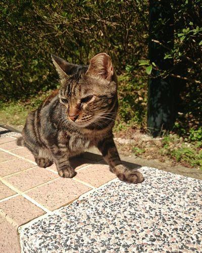 Cat Cat♡ Cat Lovers Stray Cat