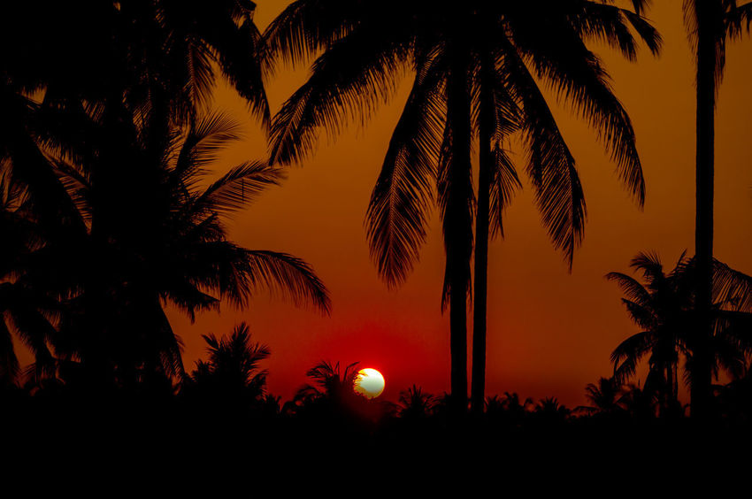 Silhouette coconut palm trees on beach with sunset. Beauty In Nature Coconut Palm Tree Growth Idyllic Nature Night No People Orange Color Outdoors Palm Leaf Palm Tree Plant Scenics - Nature Silhouette Sky Sunset Tranquil Scene Tranquility Tree Tree Trunk Tropical Climate Tropical Tree Trunk