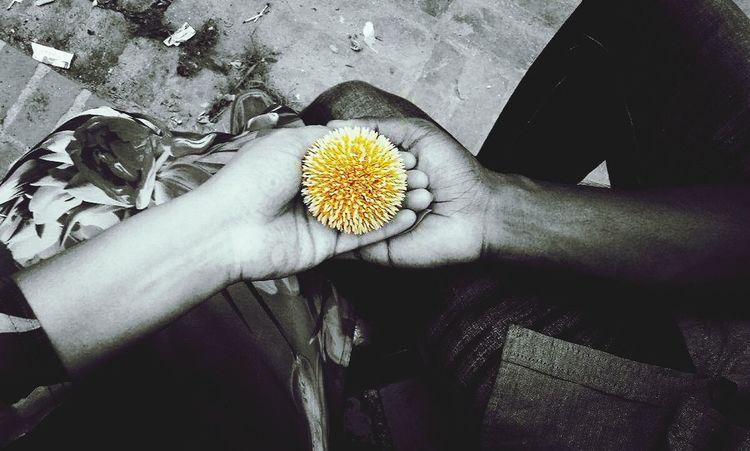 love...💜 Heart Love Flower That Evening Forever