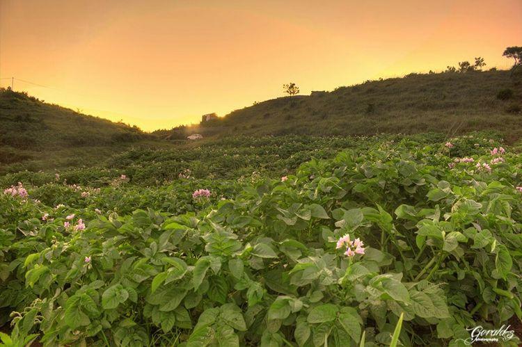 Kper phan (potato fields) at Kyrdemkhla Landscape_photography Landscapes Landscape Landscape_Collection
