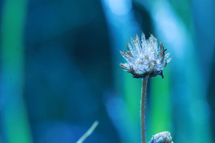 Close up dew