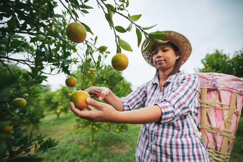 Woman holding apple and tree
