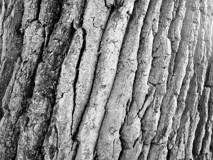 Baum Rinde